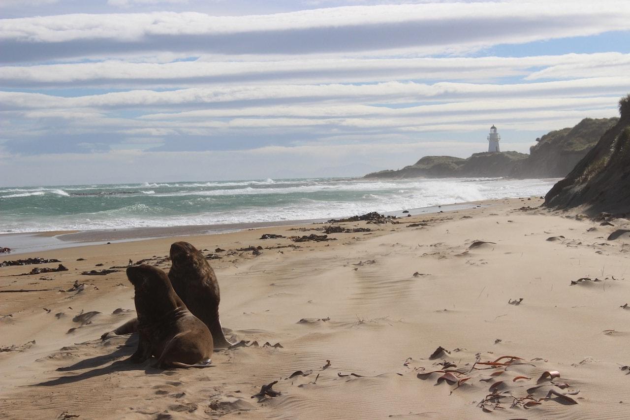 Fotospots Neuseeland Catlins Coast
