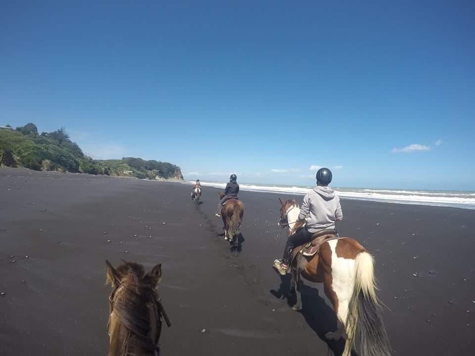 Wwoofing Neuseeland mit Pferden