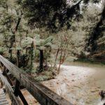 Abel Tasman Coast Track Natur Erlebnis Wandern Neuseeland