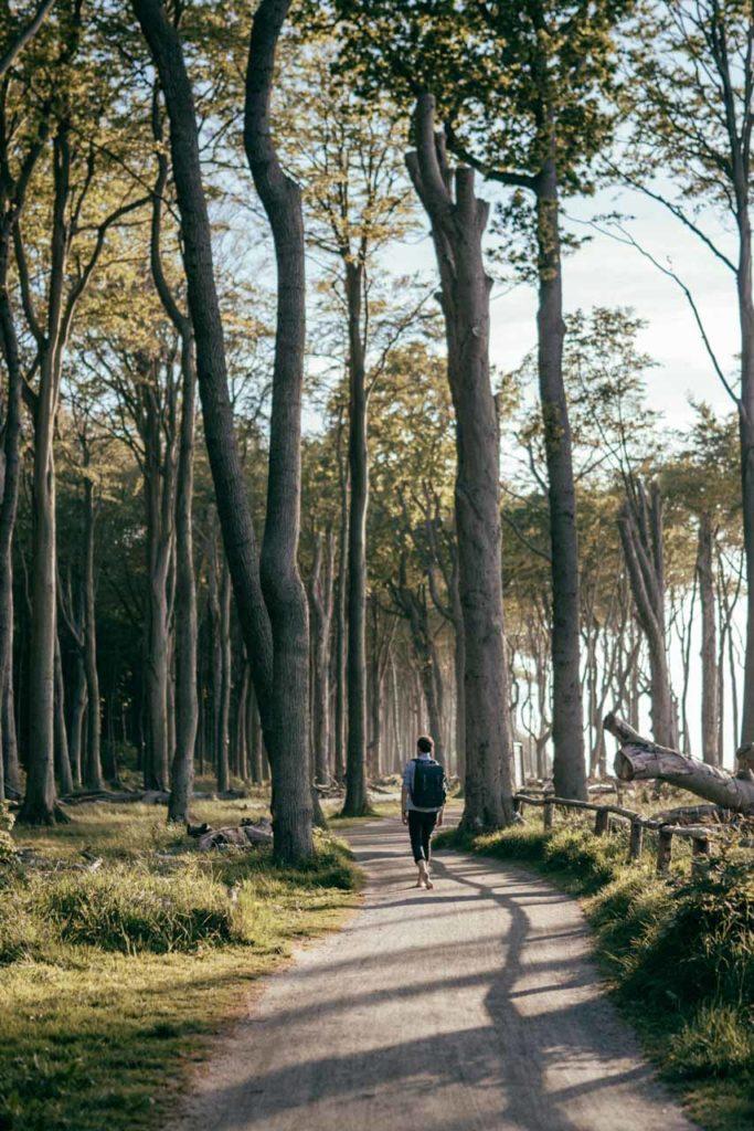 Gespensterwald mystisch