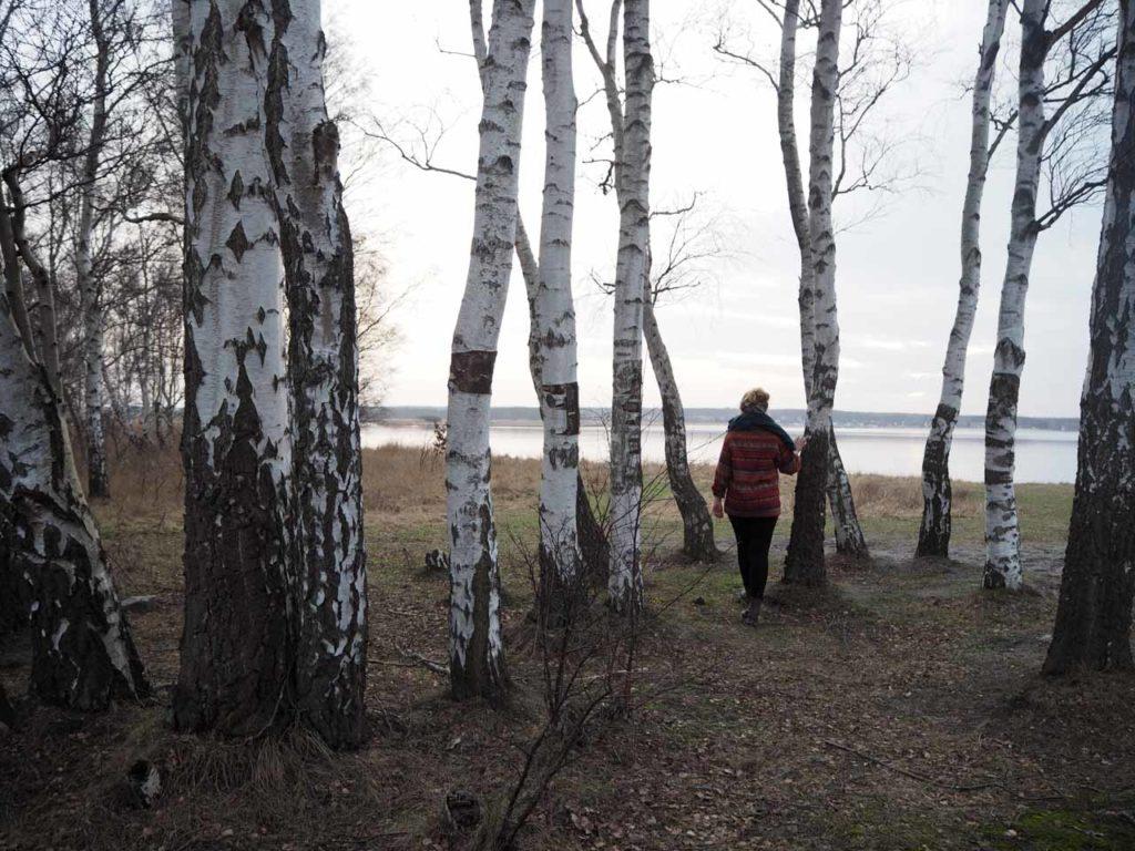 Spaziergang unter Birken