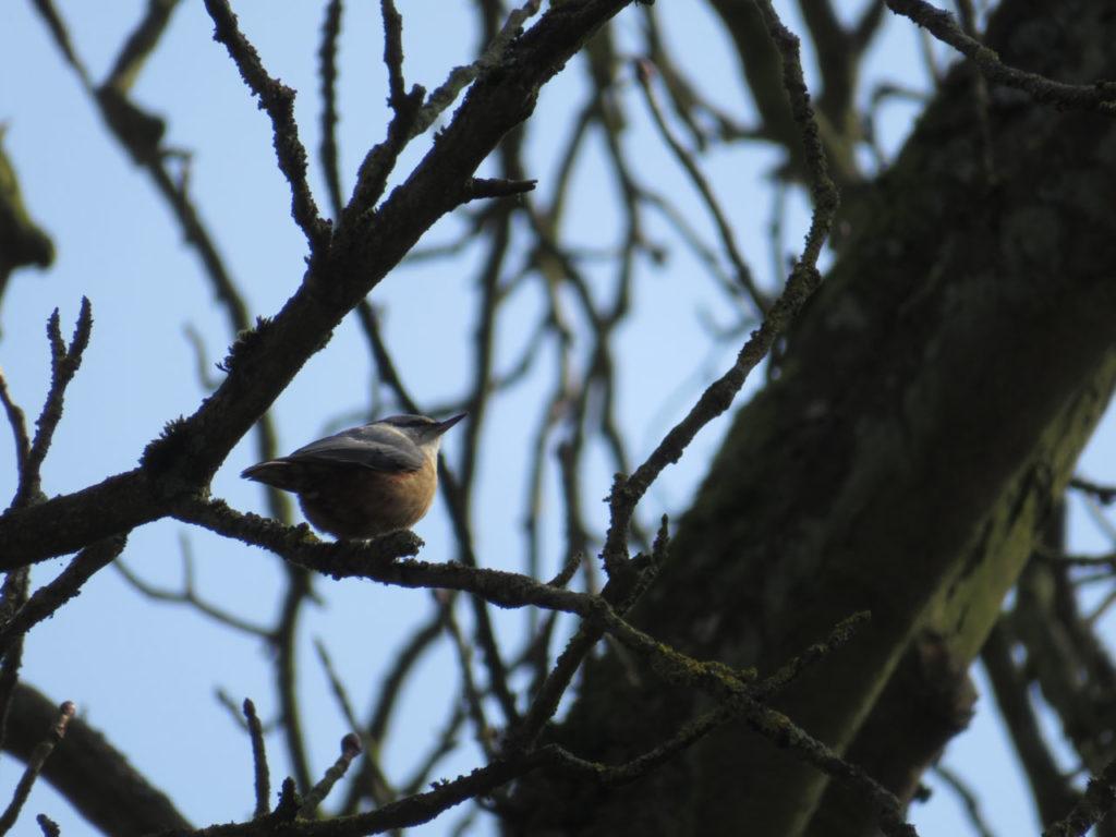 Kleiner Singvogel sitzt zwischen den Ästen eines Baumes