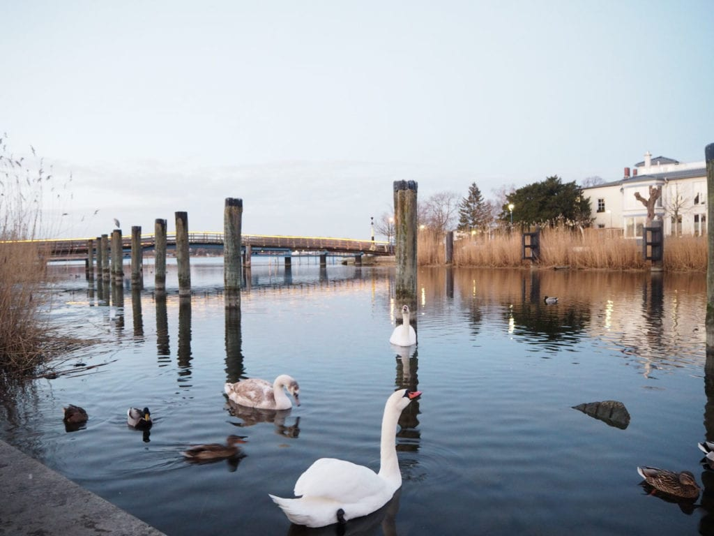 Schwäne, Enten und ihre Jungen auf dem winterlichen Wasser