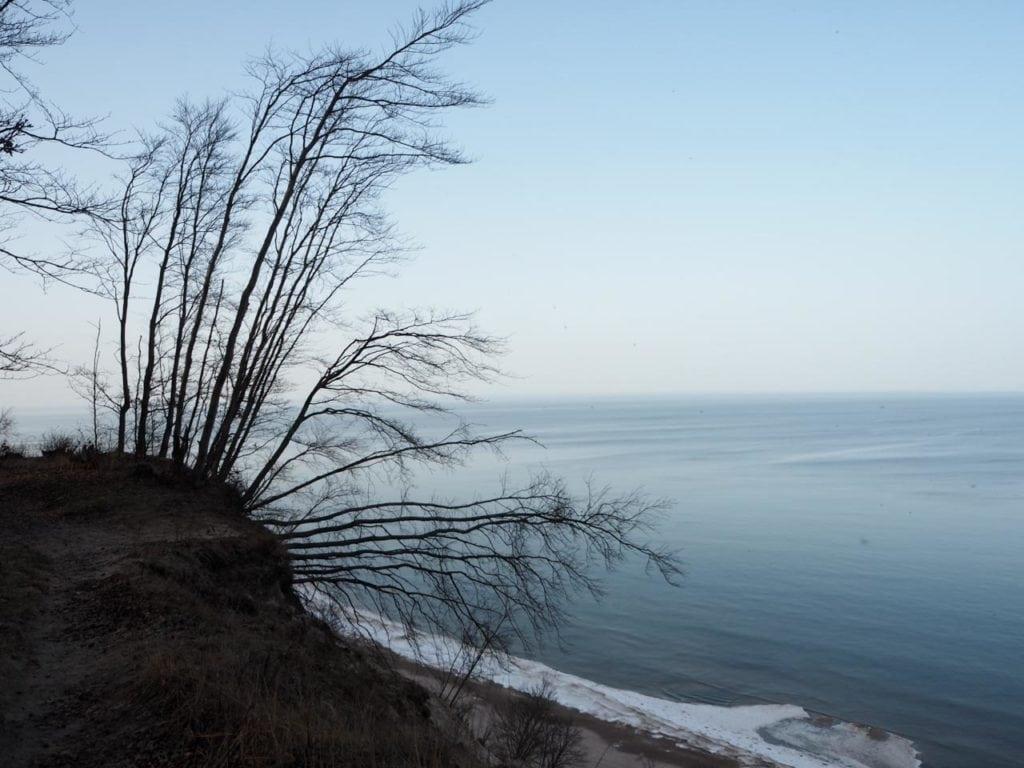 Bäume, die sich mit aller Kraft an der Steilküste festhalten